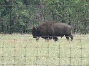 WMWF - Buffalo