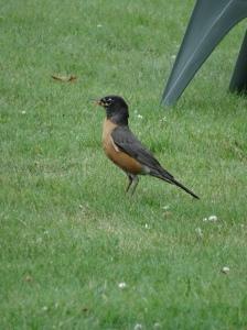 Robin, Lake Placid, NY