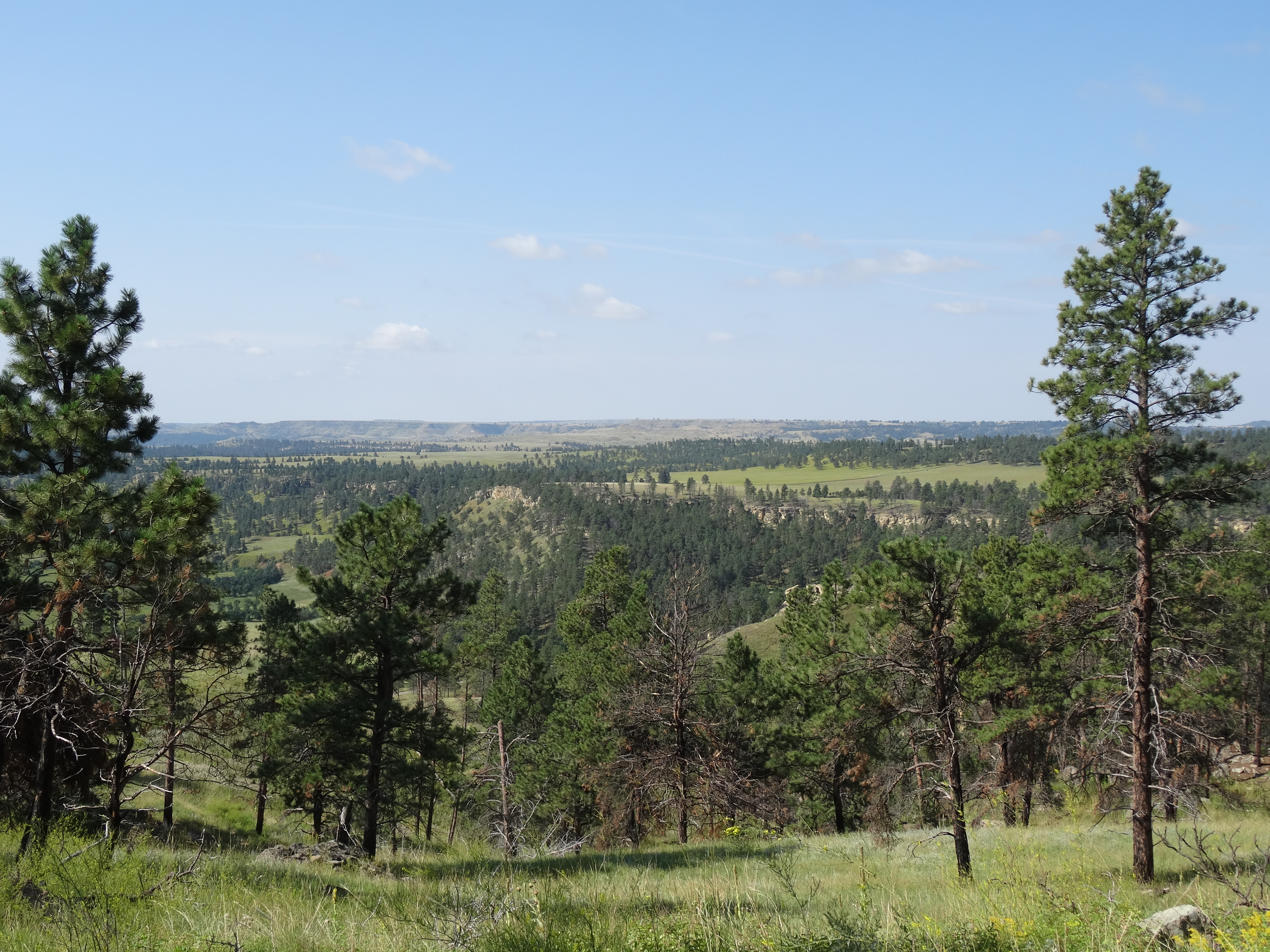 View of Montana from the Tower Trail