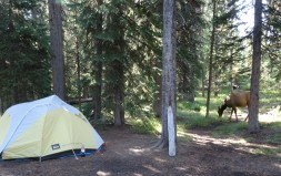 Campsite with elk