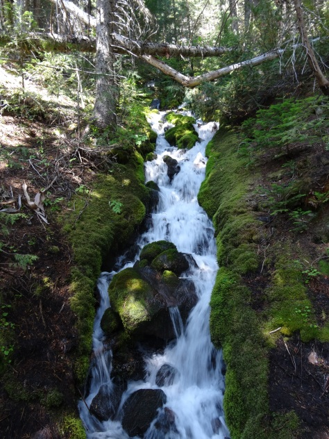 Glacier Basin Trail 2