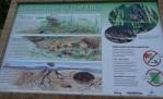 Western Toads Info