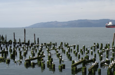 Astoria gulls