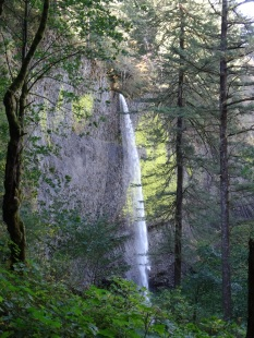 Latourell Falls through the trees