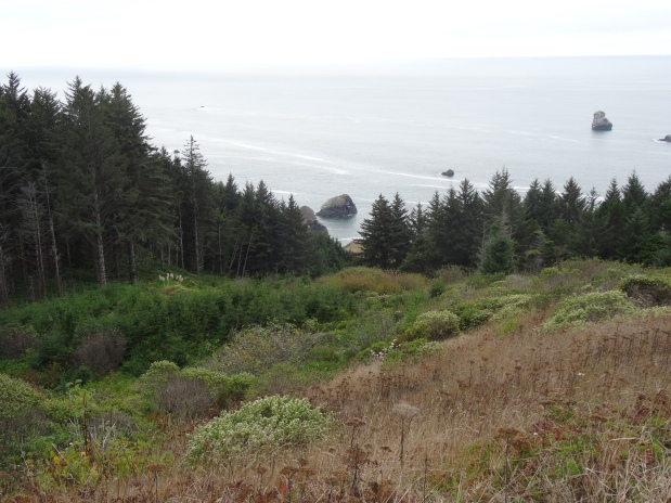 Oregon Coast 5