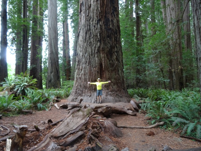 Redwood National & State Parks ~ September 22 – 24, 2014