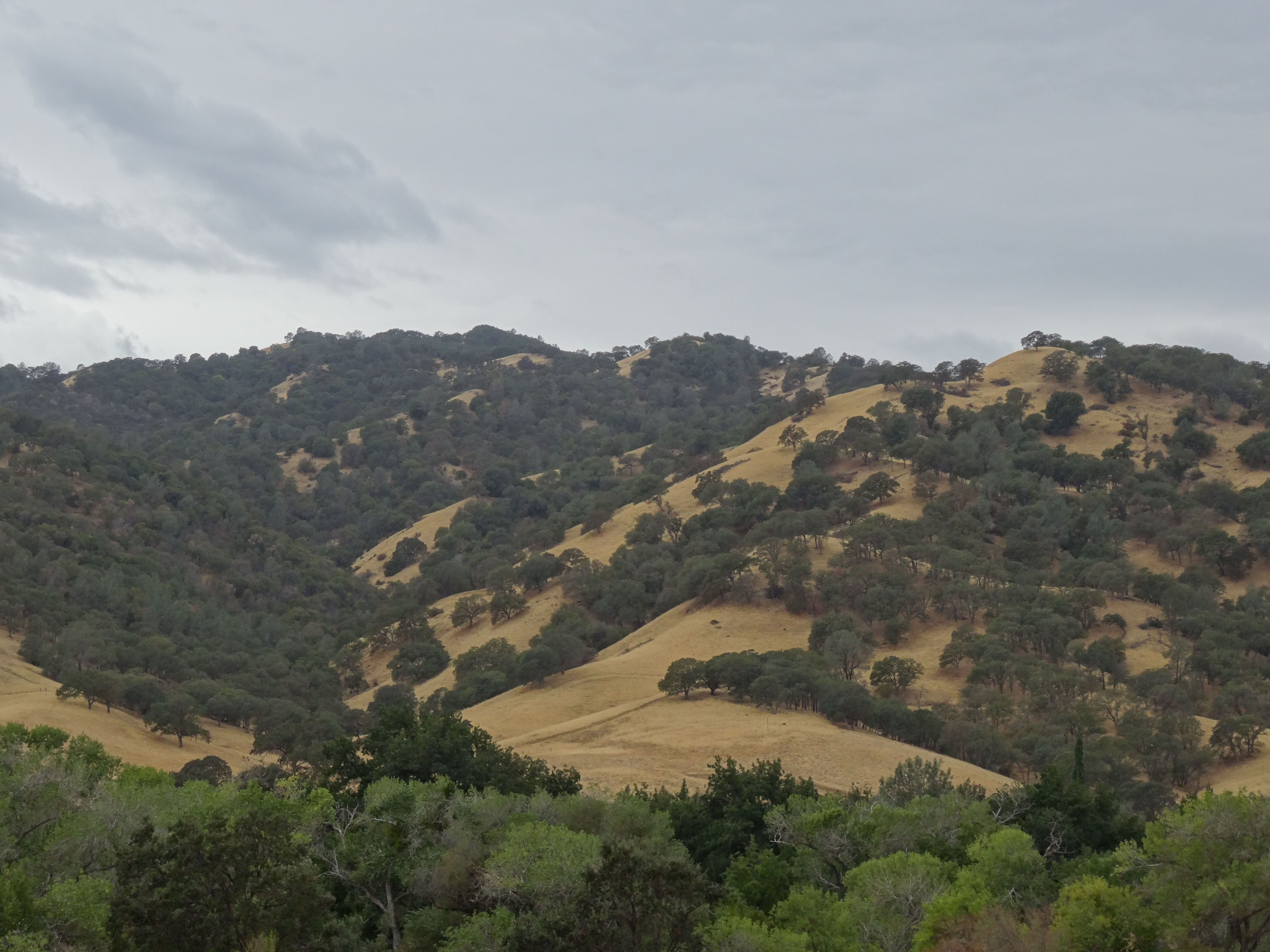 Arriving in Napa County