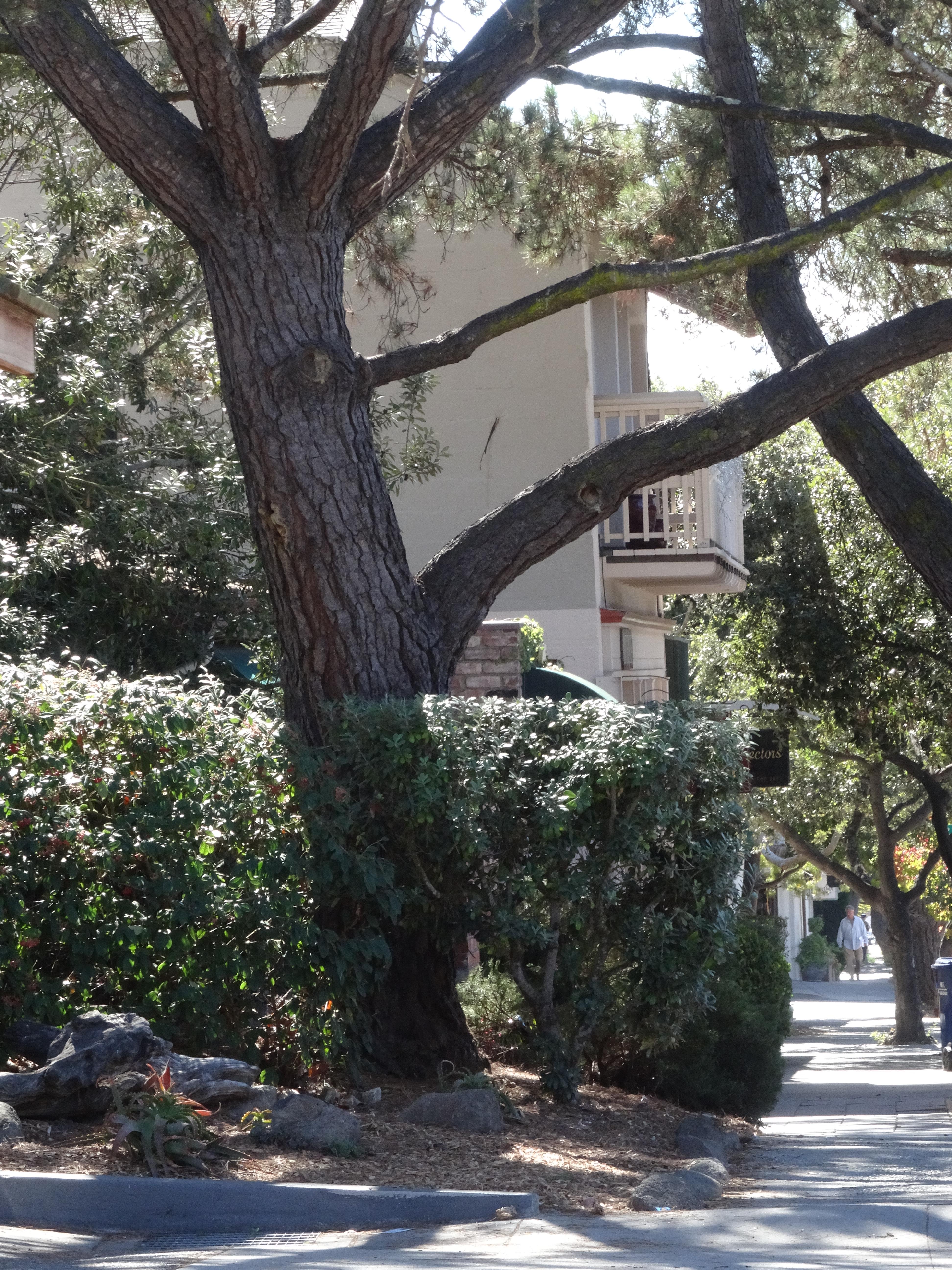 Carmel Streets 1, CA