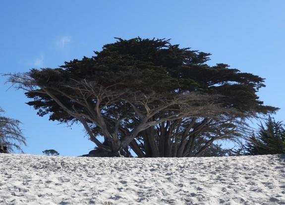 Carmel's Beach, CA