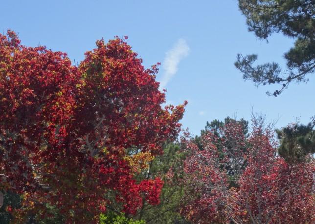 Carmel's Fall Colors
