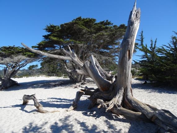 Driftwood, Carmel-by-the-Sea