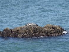SF Bay Seal (2)