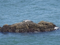 SF Bay Seal (2)