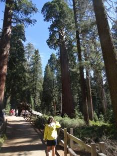 03 Grant Grove Trail, Kings Canyon NP