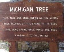 11 Michigan Tree, Kings Canyon NP