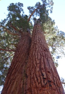 Mariposa Grove 06 - Faithful Couple (2)