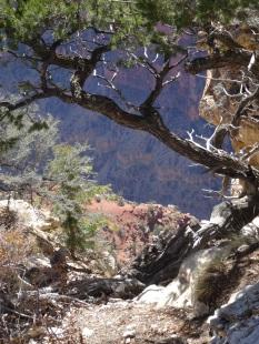 14 North Rim Along Bright Angel Trail