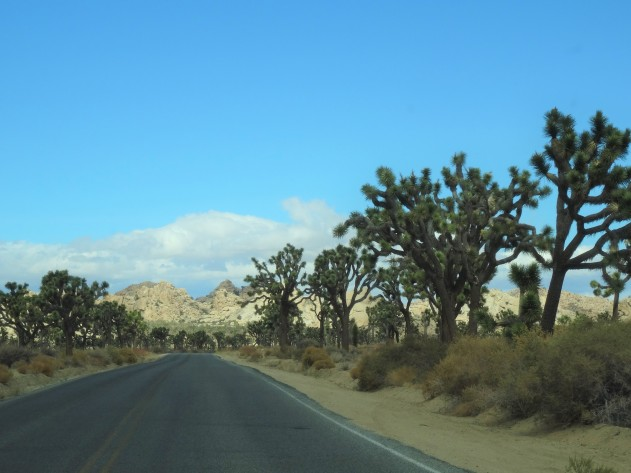Joshua Tree Nat'l Park, CA 3