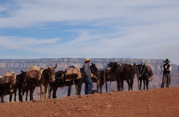 Mule Train at Cedar Ridge, Grand Canyon SR