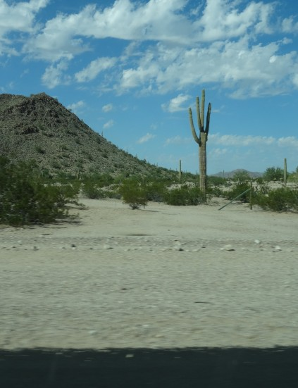Sonoran Desert From Hwy 238 AZ 2