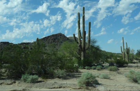 Sonoran Desert From Hwy 238 AZ 3