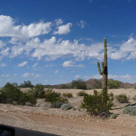 Sonoran Desert From Hwy 238 AZ