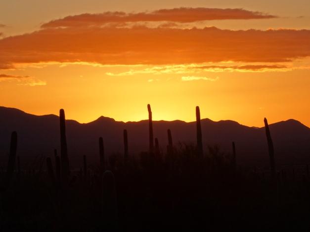 Saguaro National Park W, AZ