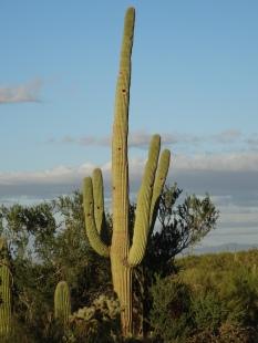 Saguaro Natl Park W 1