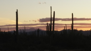 Saguaro Nat'l Park W at Sunset 2