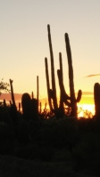 Saguaro Nat'l Park W at Sunset