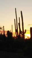 Saguaro Nat'l Park W at Sunset