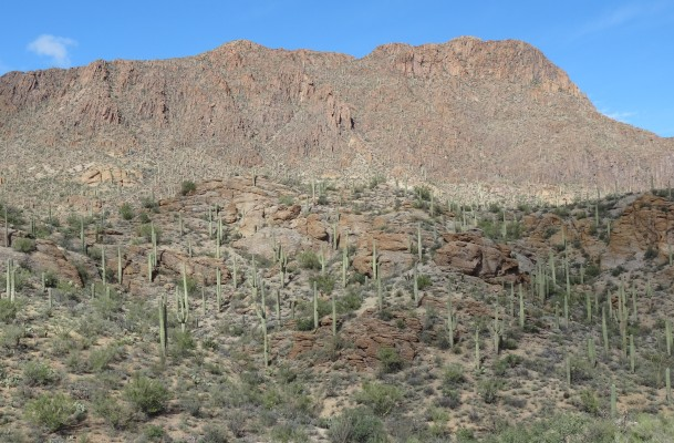 Saguaro Natl Park W, AZ 1