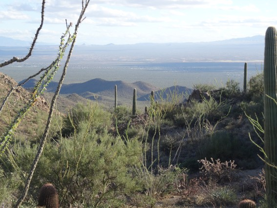 Saguaro Natl Park W from Hugh Norris Ridge