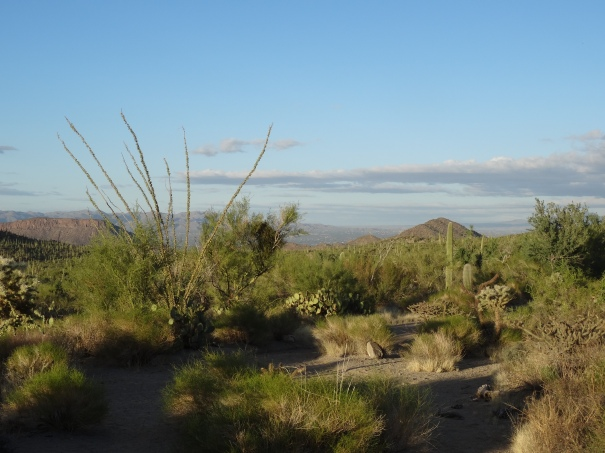 Saguaro Natl Park W