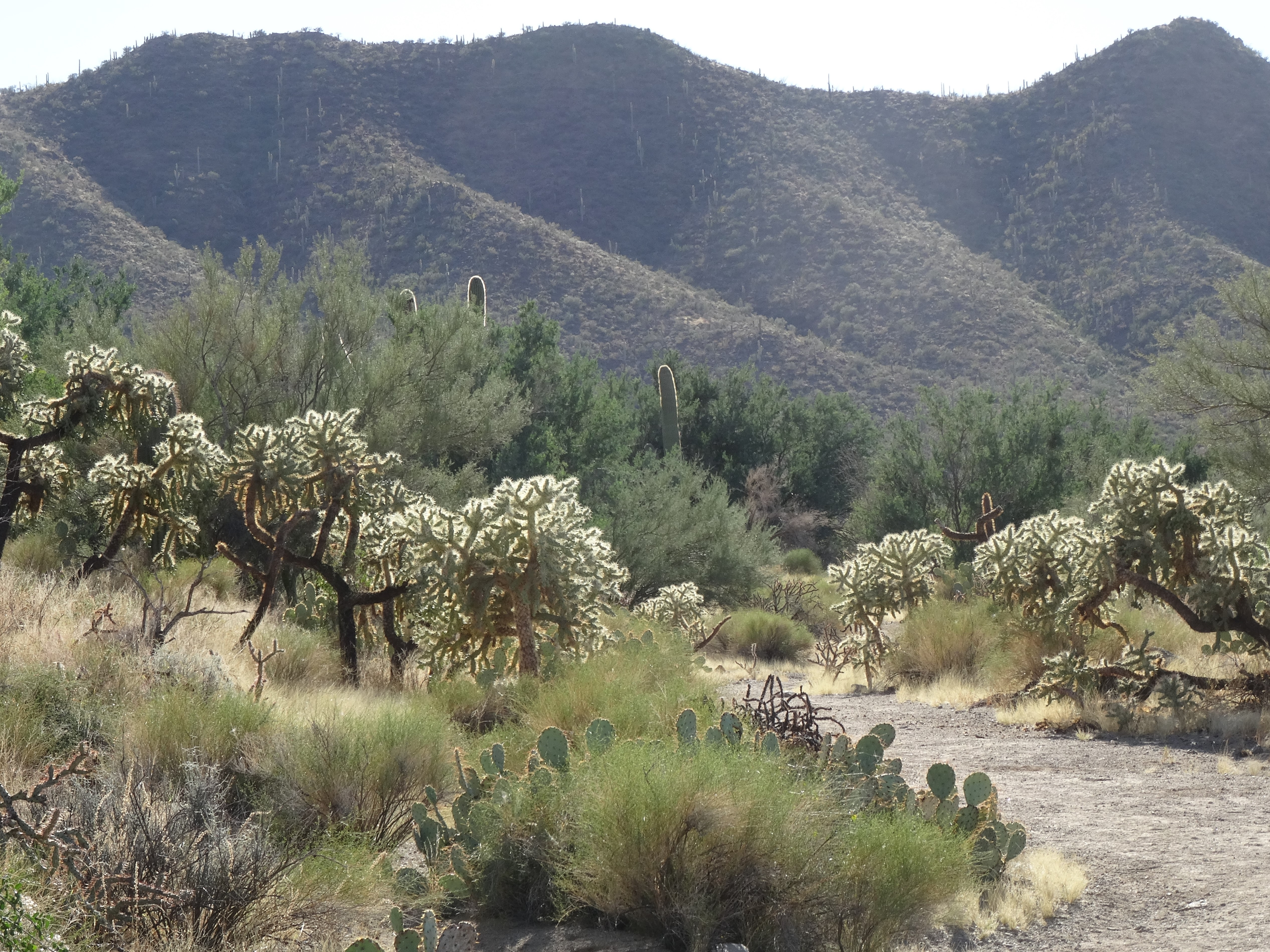 Sendero-Esperanza Trail, Saguaro NP W 1