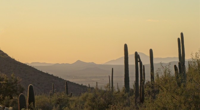 Saguaro National Park & Kitt Peak National Observatory ~ November 2 & 3, 2014