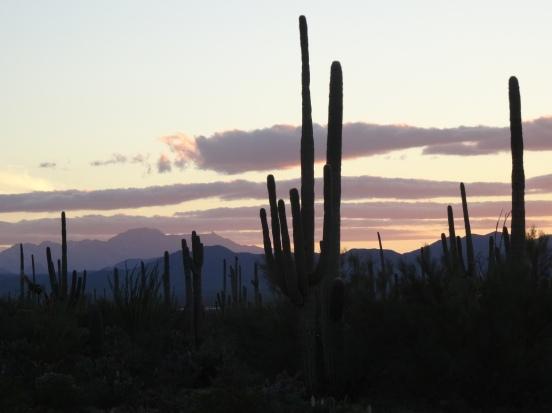 Sun setting over Saguaro Natl Park W, AZ (Golden Gate Rd)