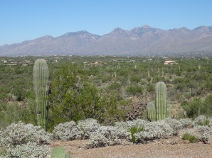 East Side of Saguaro Nat'l Park