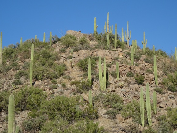 Saguaro NP W